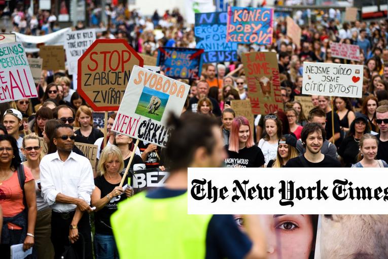 The New York Times: Přestaňme se vysmívat veganům