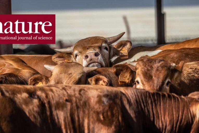 Jezme méně masa: Zpráva OSN o změně klimatu volá po změnách ve stravování.