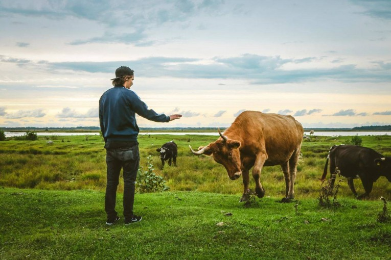 Jak mluvit o zvířatech, chceme-li dosáhnout společenské změny