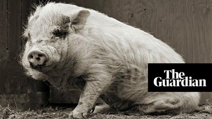 Zvířata ve výslužbě: když je jim umožněno dožít se stáří (The Guardian)