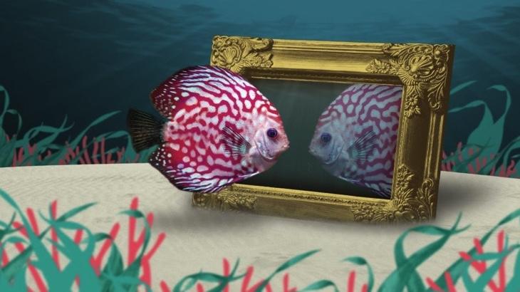 Bohatý emocionální život ryb: hraní, námluvy i ješitnost