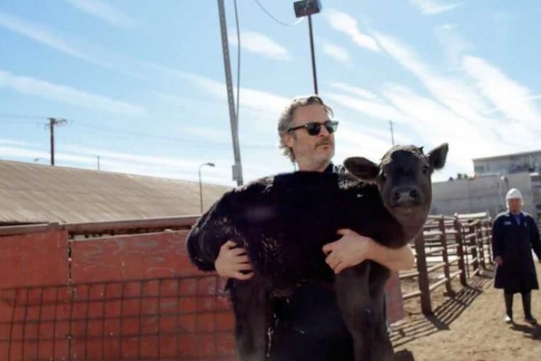 Joaquin Phoenix vysvobodil z jatek krávu i s jejím týden starým telátkem
