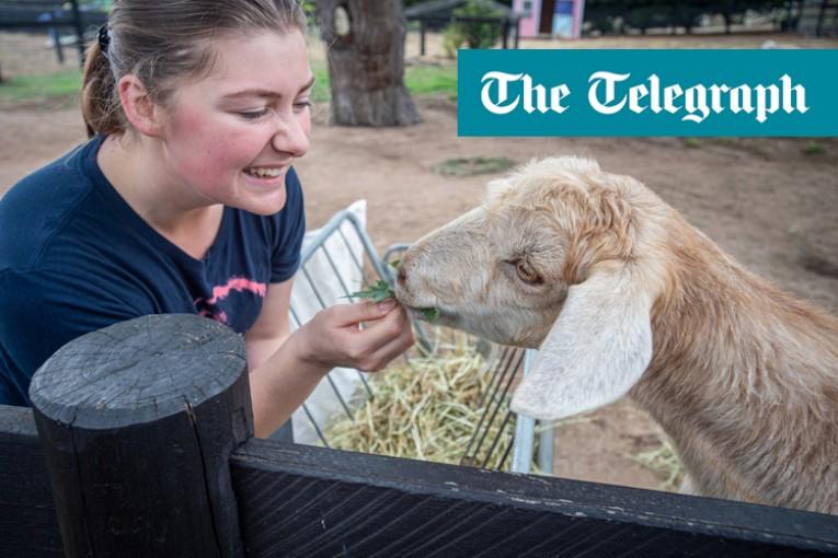 Kozy jsou stejně tak milující a inteligentní jako psi, říkají ohromení vědci