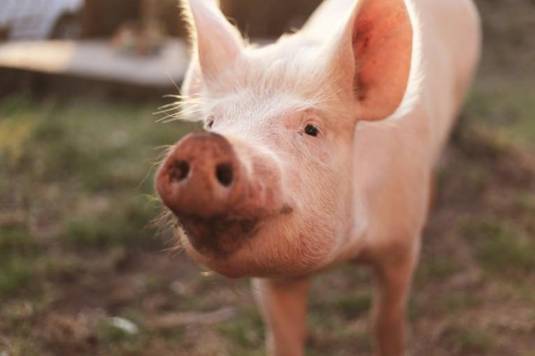 Když vegani řeknou jen A, ale k B nedojdou aneb Proč jsou azyly pro zvířata nedílnou součástí cesty k veganskému světu