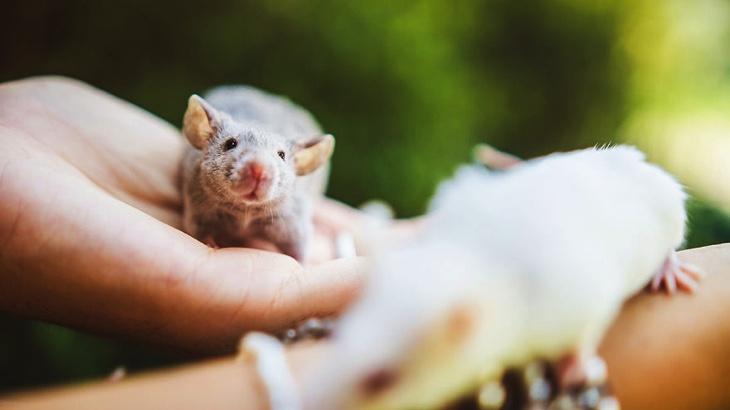 Fotila jsem bývalé pokusné potkany po záchraně. Jejich výrazy mluví za vše