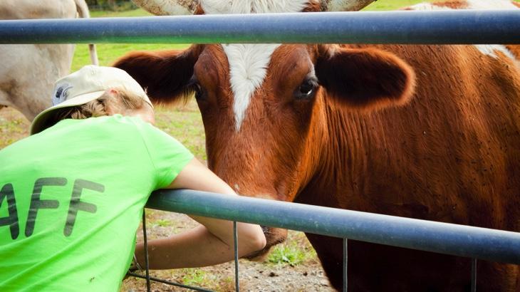 Zvířata jako partneři při šíření veganství