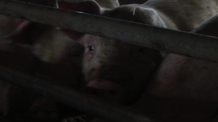 Stát bude dotovat utrpení zvířat a planety
