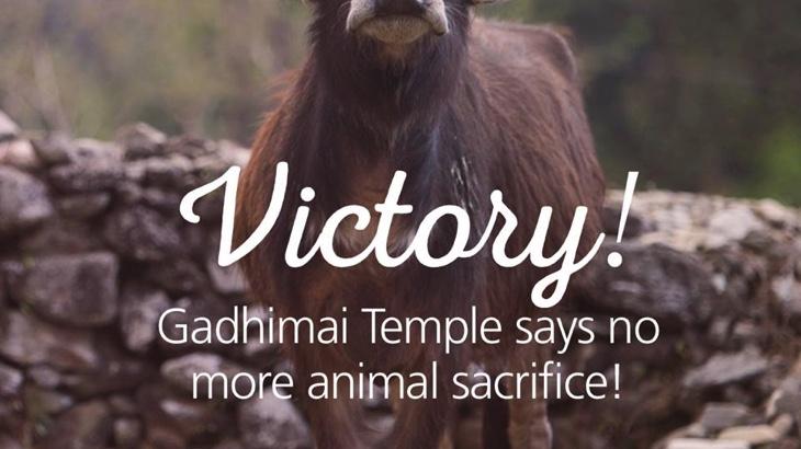 Vítězství! Obětování zvířat během nepálského Gadhimai festivalu bylo zakázáno. Půl milionu zvířat ušetřeno!