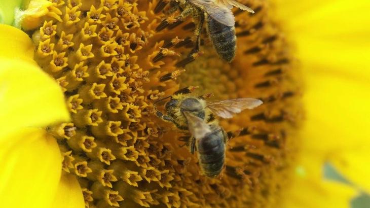 Proč vegani nejí med