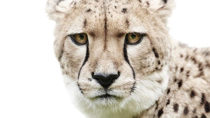 Portréty zvířecích tváří