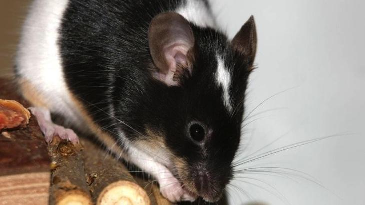 Zákazy testování kosmetiky na zvířatech ve světě