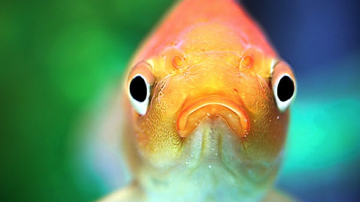 Ryby jsou emocionální bytosti, které cítí bolest