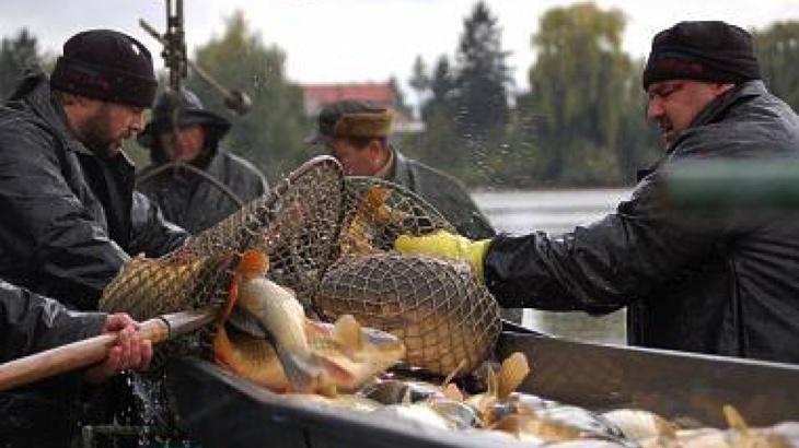 Za nehostinné rybníky může byznys s kapry