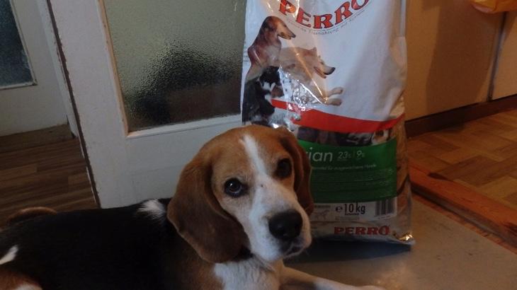 Psi a rostlinná strava - otázky a odpovědi