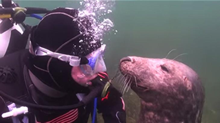Potápěč nechápal, co tuleň chce - než ho chytil za ruku (video)