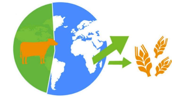 Přechod k veganství sníží uhlíkovou stopu stravy na polovinu