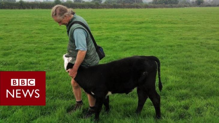 BBC: Cenu BAFTA získal snímek o veganském farmáři, který se vzdal svého stáda