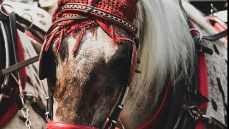 Prague Horse Save